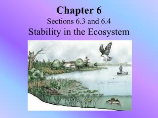 Chapter 6 Sections 6.3 and 6.4 Stability in the Ecosystem