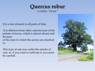 It is a tree situated in all parts of Italy.