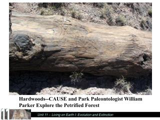 Hardwoods--CAUSE and Park Paleontologist William Parker Explore the Petrified Forest