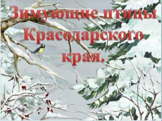Зимующие птицы Красодарского  края.