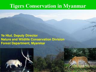 Tigers Conservation in Myanmar