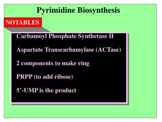 Pyrimidine Biosynthesis