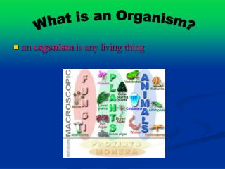 an  organism  is any living thing