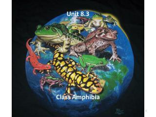 Unit 8.3 Class  Amphibia