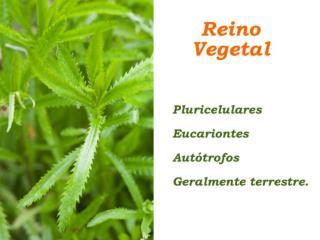reino vegetal karol 6