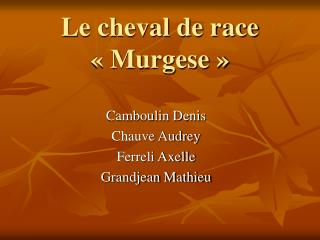 Le cheval de race  « Murgese »