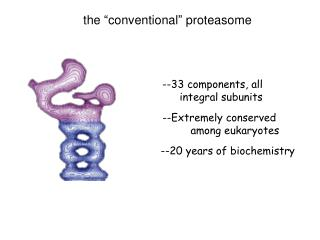 The  conventional  proteasome