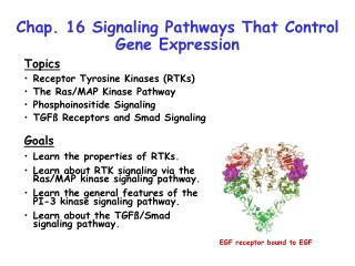 Chap. 16 Signaling Pathways That Control Gene Expression