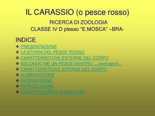 """IL CARASSIO (o pesce rosso) RICERCA DI ZOOLOGIA CLASSE IV D plesso """"E.MOSCA"""" –BRA-"""