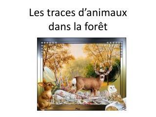 Les traces d'animaux  dans la forêt
