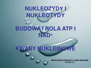 NUKLEOZYDY I  NUKLEOTYDY BUDOWA I ROLA ATP I NAD + KWASY NUKLEINOWE