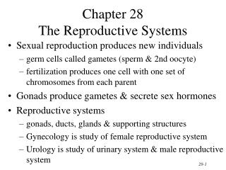 Chapter 28 The Reproductive Systems