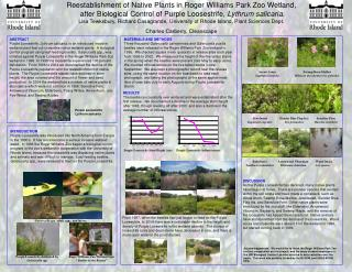 Reestablishment of Native Plants in Roger Williams Park Zoo Wetland,