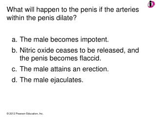 What will happen to the penis if the arteries within the penis dilate?
