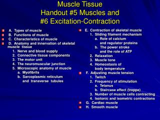 Muscle Tissue Handout 5 Muscles and  6 Excitation-Contraction