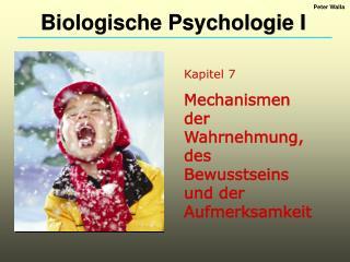 Kapitel 7 Mechanismen der Wahrnehmung, des Bewusstseins und der Aufmerksamkeit