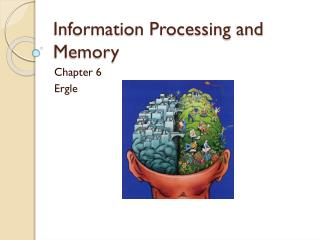 Information Processing and Memory