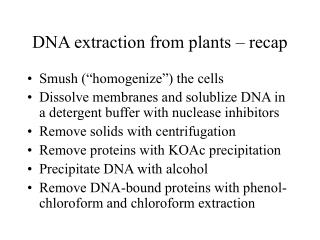 DNA extraction from plants – recap