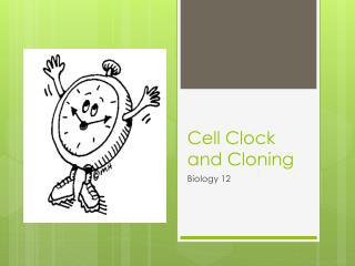Cell  Clock and Cloning