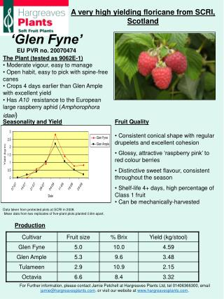 The Plant (tested as 9062E-1)  Moderate vigour, easy to manage