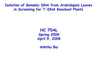 Isolation of Genomic DNA from Arabidopsis Leaves in Screening for T-DNA Knockout Plants