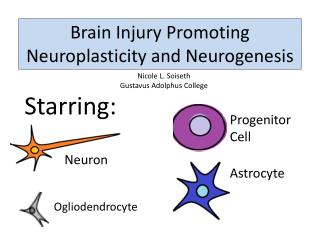 Brain Injury Promoting  Neuroplasticity  and  Neurogenesis