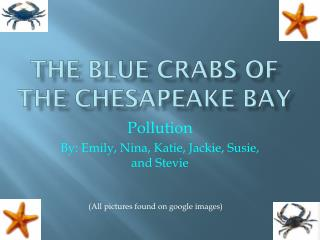The Blue Crabs of the Chesapeake Bay