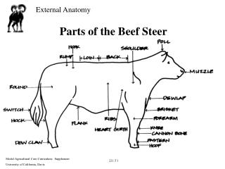 Parts of the Beef Steer
