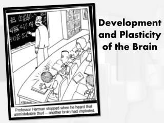 Development and Plasticity of the Brain