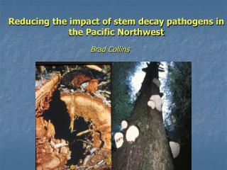 Reducing the impact of stem decay pathogens in the Pacific Northwest