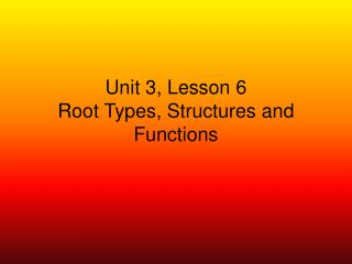 Unit 3, Lesson 6 Root Types, Structures and Functions