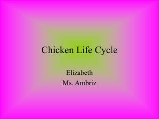 Chicken Life Cycle