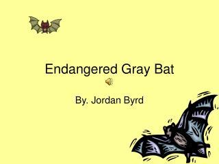 Endangered Gray Bat