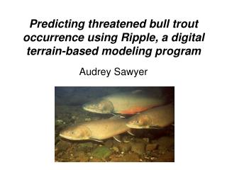 Predicting threatened bull trout occurrence using Ripple, a digital terrain-based modeling program