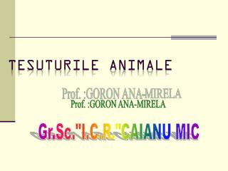 TE SUTURILE ANIMALE