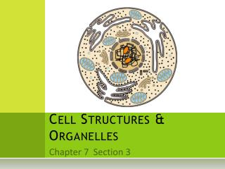 Cell Structures & Organelles