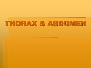 THORAX & ABDOMEN
