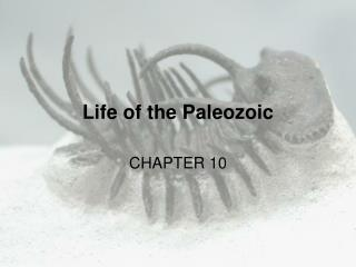 Life of the Paleozoic