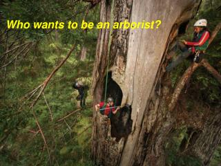 Who wants to be an arborist?