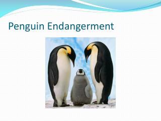 Penguin Endangerment