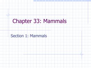 Chapter 33: Mammals