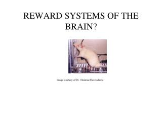 REWARD SYSTEMS OF THE BRAIN?