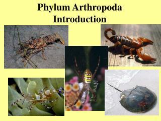 Phylum Arthropoda Introduction