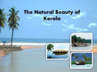 The Natural Beauty of Kerala