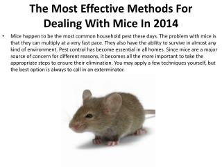 The Most Effective Methods For Dealing With Mice In 2014