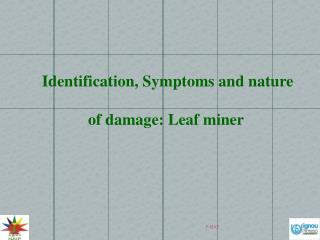 Identification, Symptoms and nature of damage: Leaf miner