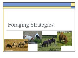 Foraging Strategies