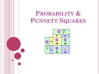 Probability &  Punnett  Squares