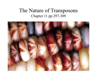 The Nature of Transposons Chapter 11 pp 297-309