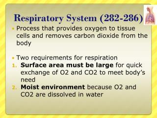 Respiratory System (282-286)